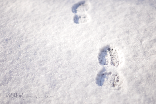 Day 12 of 365 snow footprints Philadelphia, Rockledge