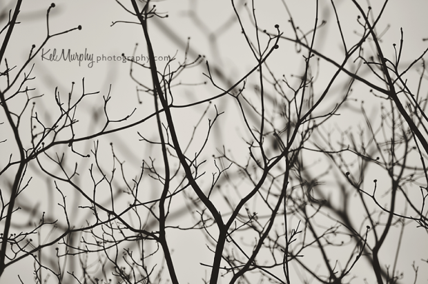 Kel Murphy Photography day 18 of 365 winter branches in fog BW
