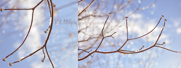 Kel Murphy Photography photo of icy tree branch with snow bokeh in background