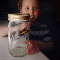 Kel-Murphy-Photography-boy-shh-butterfly-in-jar-Instagram-Project-365-Child-Children-Photographer-Philadelphia-Abington-Montgomery-County-Bucks-PA-2015-17